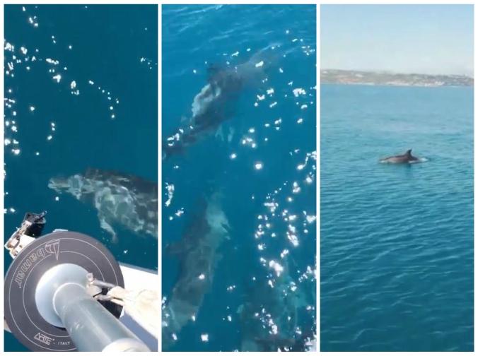 delfini-news