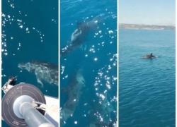 Oggi 5 luglio 2017. I delfini tornano a nuotere nel Golfo di Vasto: un'esperienza meravigliosa!